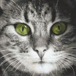 Předloha on line - Zelenooký kočka