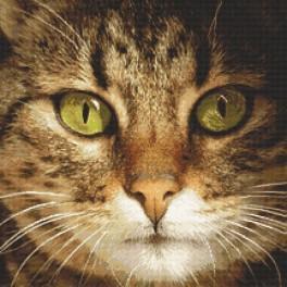 Předloha on line - Kotě Lucky