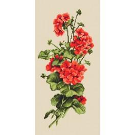 Předloha online - Červené geraniums
