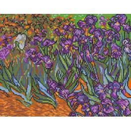 Předloha online - Kosatce - V. van Gogh