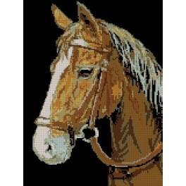 GC 3021 Koník - Předloha