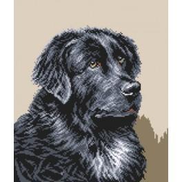 GC 33171 Novofundlandský pes - Předloha