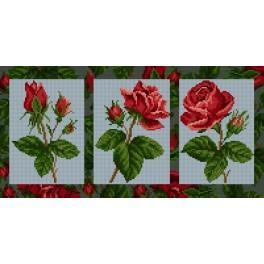 GC 6552 Růže - Předloha