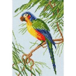 GC 801 Papoušek - Předloha