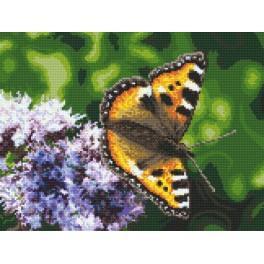 Motýl - Předtištěná aida