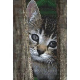 Malé nezbedné kotě - Předtištěná aida