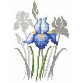 Jarní květiny - Kosatce - Předtištěná aida