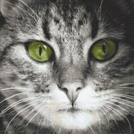 Vyšívací sada s mulinkou a podiskem - Zelenooký kočka