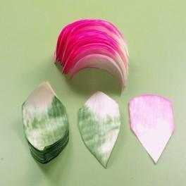 Osikowe wióry - Piliny Růže