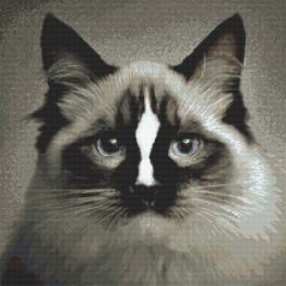 Sada s mulinkou a potiskem - Kotě ragdoll