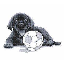Předtištěná aida - Labrador - Hraj si se mnou