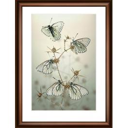 Diamond painting kit - Noční motýli