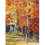 Vyšívací sada - Podzimní buky