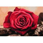 ZTDE 4631 Diamond painting sada - Červená růže