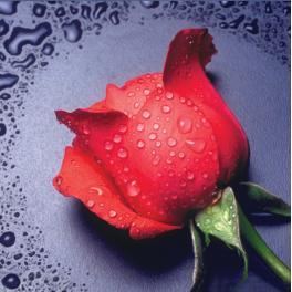 Diamond painting sada - Červená růžička