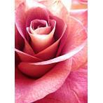 WD019 Diamond painting sada - Růžová růže