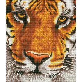 Diamond painting sada - Bengálský tygr