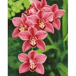 Diamond painting sada - Orchidea