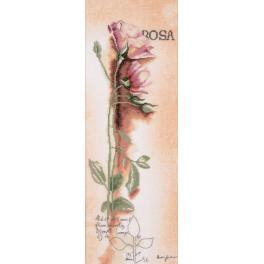 LPN-0008050 Vyšívací sada s mulinkou a pozadím - Růže botanická