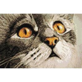 Diamond painting sada - Kočičí překvapení