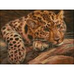 Diamond painting sada - Leopard