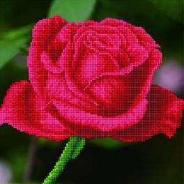 Diamond painting sada - Kvetoucí růže