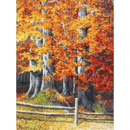 Předtištěná kanava - Podzimní buky