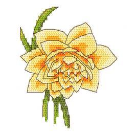 Předloha - Narcis