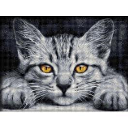Diamond painting sada - Žlutooké kotě