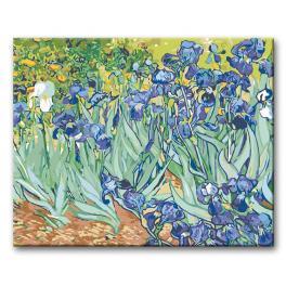 CZ 03903 Sada pro malování podle čísel - Kosatce - Van Gogh