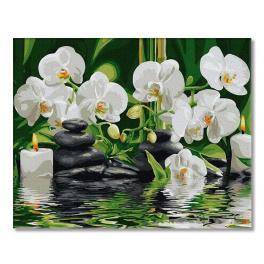 PC4050567 Malování podle čísel - Orchideje na hladině