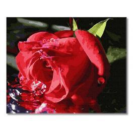 PC4050612 Malování podle čísel - Něžné poupě růže