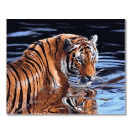 PC4050652 Malování podle čísel - Tygr a voda