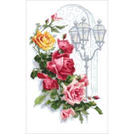 AN 10446 Předtištěná Aida - Barevné růže a lucerna