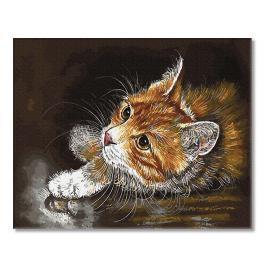 PC4050664 Malování podle čísel - Zrzavé kotě