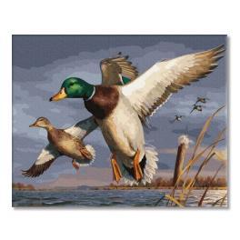 PC4050750 Malování podle čísel - Kačer a kachna