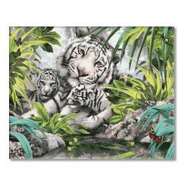 PC4050100 Malování podle čísel - Tygři ussurijští
