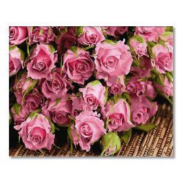 GX34269 Malování podle čísel - Subtilní růže
