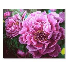 PC4050814 Malování podle čísel - Kvetoucí pivoňky